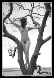 candace nude in a tree